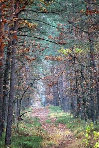 Jesienny widok przecinki leśnej w Puszczy Kozienickiej.