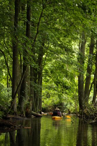 Para kajakarzy spokojnie płynie w dół rzeki Krytyni gęsto porośniętej różnorodnymi drzewami rezerwatu.