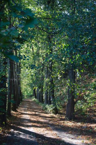 Jesienna panoram alei porośniętej z obu stron drzewami