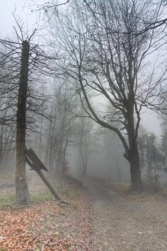 Jesienny krajobraz spowitej mgłą leśnej ścieżki.