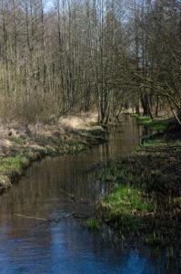 Spokojny nurt rzeki Gzówki przecinający zalesiony krajobraz Puszczy Kozienickiej.